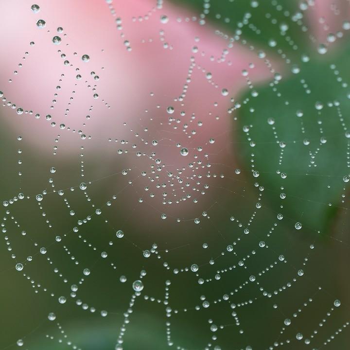 spider web 1185949 960 720